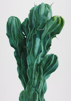 Korean artist Kwangho Lee, experiments with techniques such as scratching, rubbing of the paintbrush, tapping on the canvas and extreme enlargement of the subject, to create astounding, almost abstract, photo-realistic oil paintings of cactii. (via Designboom)