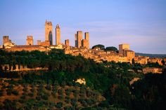 Tuscany Image - Trees and buildings, Tuscany - Lonely Planet