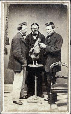 Three Men with Chicken Carte de Visite