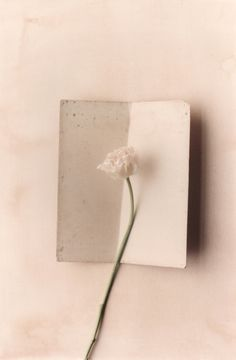 Ronald Chase Nature Series: White Flower, 1990