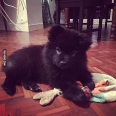 Everyone is showing their puppy, so here's my sister's one: Lumi :) - 9GAG