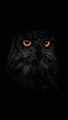 Wow! Never seen a pure black owl so beautiful