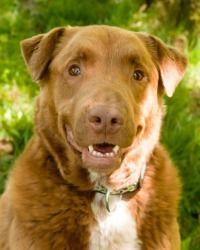 Gable @ Louie's Legacy Animal Rescue, Cincinnati