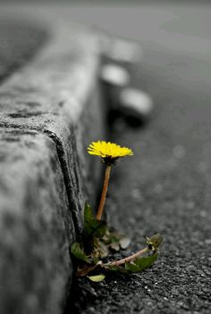 Life will always find a way.