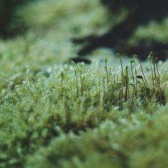 Green Ability creates a intense source of green plant phytochemicals, which actually advertise general health. Fae Aesthetic, Elf Druid, Dear Evan Hansen, Luke Bailey, Alex Garland, Eternal Return, Power Bike, Power Wheels, Motor Company