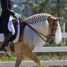 dressage - that's the most beautiful braiding job I've ever seen.
