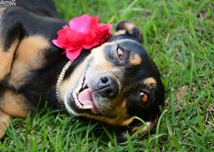 This Pregnant Dog Just Did the Best Maternity Photoshoot Ever - BlazePress