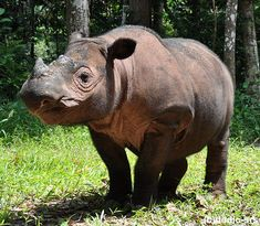Endangered Species Facts | Top 6 Critically Endangered Species