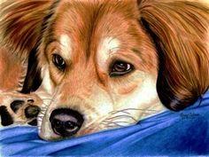 Ready For A Nap by anniecanjump on DeviantArt Animal Drawings, Pencil Drawings, Art Drawings, Charcoal Drawings, Illustrations, Illustration Art, Ink Pen Art, Color Pencil Art, Dog Art