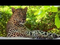 Leopard Rock at Naples Zoo