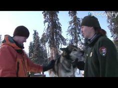 Discovery News clip from Denali National Park Discovery News, 5th Grade Reading, Stone Fox, Life Skills, Social Studies, Language Arts, Alaska, Shared Reading, The Unit