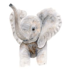 Trumpeting Baby Elephant