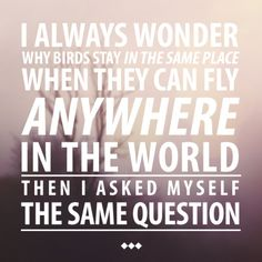 I always wonder why birds stay in the same place when they can fly anywhere in the world. Then I ask myself the same question.