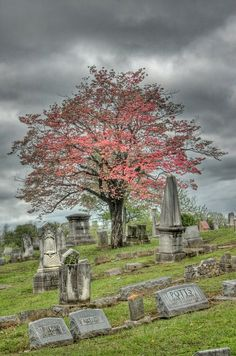 ~ Amazing Tree! ~  Fairview Cemetery in New Albany, IN
