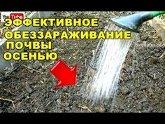 Garden Insects, Diet And Nutrition, Garden Tools, Vegetables, Green, Youtube, Sodas, Yard Tools, Vegetable Recipes