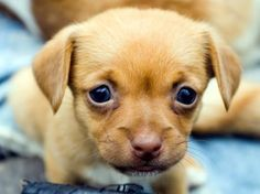 Hoe schattige dierenfoto's agressie opwekken - HLN.be
