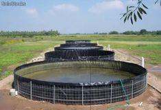 Fabulosos estanques de geomembrana para cria de trucha o tilapia mojarra…