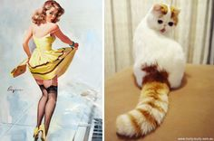 "As popular as the blog comparing cats to beautiful men is, it was clear that there was a market for comparisons between cats and pretty ladies as well. I can only assume that this is the reasoning behind the creation of the ""Cats That Look Like Pinup Girls"" Tumblr. Now ladies and gentlem"