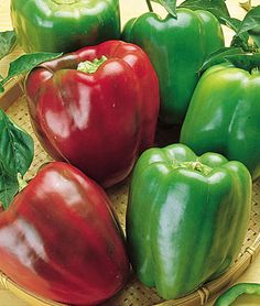 "Pepper, Sweet California Wonder  HEIRLOOM. The Standard Bell Pepper	  HEIRLOOM. The standard bell pepper for many decades, this 1928 introduction is still the largest open-pollinated, heirloom bell you can grow, and a big improvement over the earlier bells. Consistently produces 3"" X 4"", 4-lobed fruit."
