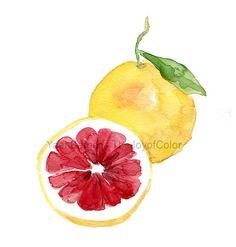 Pink grapefruit art print watercolor painting от TheJoyofColor