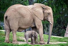 Ces adorables bébés animaux en compagnie de leur version adulte vous feront fondre de tendresse