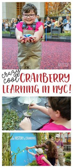 Crazy Fun Cranberry
