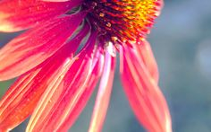 #wallpaper #flower # garden #summer #sun #orange #beautiful #colorful