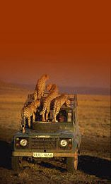 Land Rover and African Chitas in Kenia. App for Land Rover warning lights is now… African Safari, African Animals, Tanzania, Animals Beautiful, Cute Animals, Wild Animals, Artic Animals, Foto Picture, Safari Chic