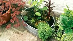 The Ultimate Guide To DIY Outdoor/Indoor Mini Fish Ponds   STEP-BY-STE – AQUAPROS Small Water Gardens, Indoor Water Garden, Backyard Water Feature, Container Pond, Container Water Gardens, Container Gardening, Small Water Features, Water Features In The Garden, Patio Pond