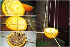 Bird feed inexpensive and original - 7 creative ideas # bird feed do it yourself . Bird Food, Up Halloween, Tis The Season, Bird Feeders, Diy And Crafts, Projects To Try, Xmas, The Originals, Ethnic Recipes