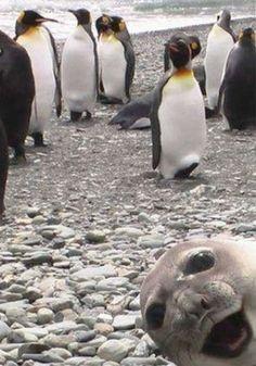 5 animais sorridentes e de bom humor ''Você não me viu aqui...''