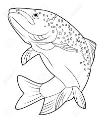 Image result for drawings of trout