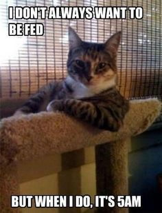 LOL just like Tiger! This is like the Dos Equis guy as a cat! LoL