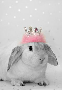 It's a bunny wearing a tiara..this is   adorable