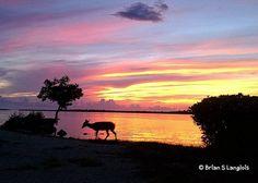 Throwback to 10/13/2011. _______________________ #continuous_journey #sunset #sunsets #flkeys #bigpinekey #florida #sunrise_sunsets_aroundworld #sunrise_sunset #sky_sultans #sun #keydeer #myskynow #sunsetfl #bella_shots #sky_brilliance #bns_sunrise #sunsetsnipers #sky_sea_sunset #hashtagfl #florida_greatshots #fun_in_florida #sunriseandsunsets #sunrises_and_sunsets #sunrise_and_sunsets