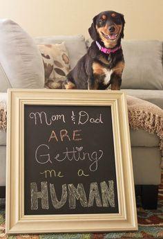 Originele aankondiging als de hond tot nu toe jullie 'baby' was!