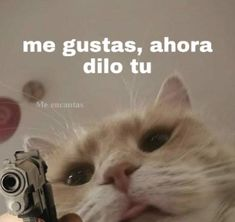 Stupid Memes, Dankest Memes, Funny Memes, Simpsons Videos, Romantic Memes, Cute Cat Memes, Spanish Memes, Cartoon Memes, Wholesome Memes