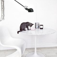 No paws or claws in the furniture - Pet style at home with Annika von Holdt