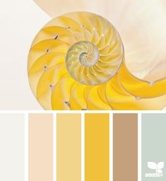 Nautilus Yellow Coastal Decor Color Palette