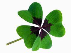 Os 3 principios de sorte segundo a astrologia chinesa