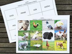 Loto domácí a hospodářská zvířata, globální čtení