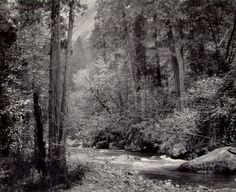 Ansel Adams Photography | Ansel Adams, Tenaya Creek, Dogwood, Rain , Yosemite Valley, 1948