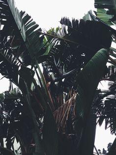 Ich liebe die Pflanze