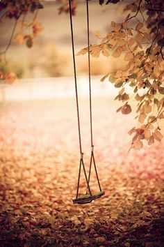the old swing on the old oak tree