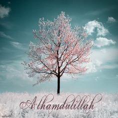 ❤ alhamdulillah for all !!!