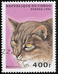 Republic of Congo 1996 Cat Stamps - Maine Coon
