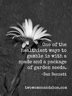 Quotes to Brighten Your Day : If you agree with most of these gardening quotes, you are definitely a true gardener!Gardening Quotes to Brighten Your Day : If you agree with most of these gardening quotes, you are definitely a true gardener! Great Quotes, Love Quotes, Inspiring Quotes, Funny Quotes, Singapore Sling, Garden Quotes, Just Dream, Gambling Quotes, Garden Signs