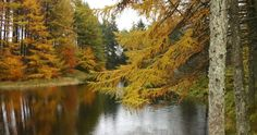 Autumn colours at Grizedale Forest