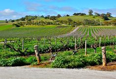 The Barossa Valley - our upcoming Road Stall Australia app wants to make it easy to find wineries too!