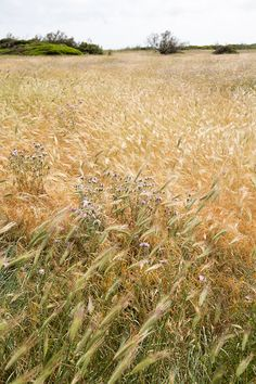 sit in a field.  alone. wind blowing through your hair.